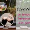 YogaWine - Un tempo di benessere con gusto! Cantina Italiana Noventa Padovana
